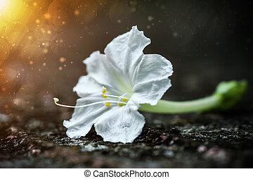 blanc, flowers.