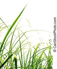 blanc, herbe, arrière-plan vert