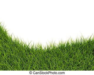 blanc, herbe, closeup, isolé