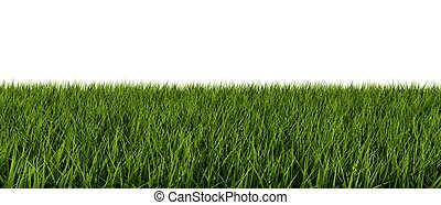 blanc, herbe, isolé, fond