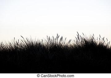 blanc, herbe, silhouette, fond, marram