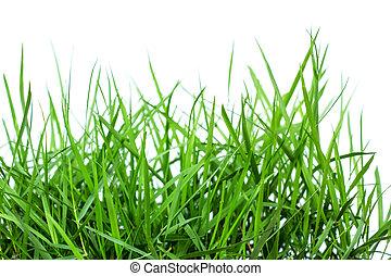 blanc, herbe, vert, isolé, fond