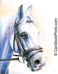 blanc, horse.