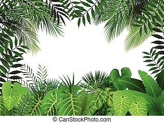 blanc, jungle, fond