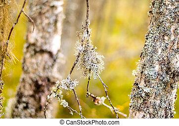 blanc lichen arbre mousse blanc lichen arbre esp ce photographie de stock. Black Bedroom Furniture Sets. Home Design Ideas