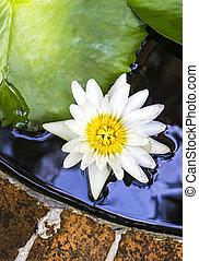 blanc, lotus, dans, étang