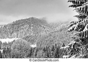 blanc, montagne, noir, paysage