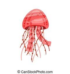 blanc, natation, beau, gelée, arrière-plan., plat, vecteur, tentacles., fish, aquatique, dessin animé, méduse, méduse, isolé, rouge clair, textured, illustration, creature., animal marin, océan, ou