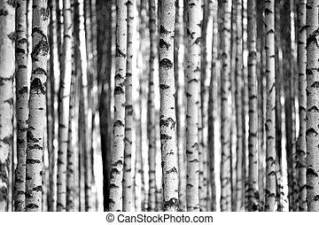 blanc, noir, arbres, bouleau