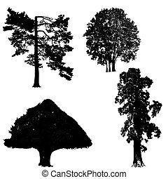 blanc, noir, arbres, collection