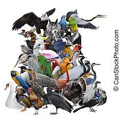 blanc, oiseaux, collection, isolé