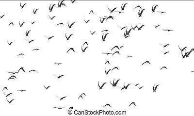 blanc, oiseaux, fond