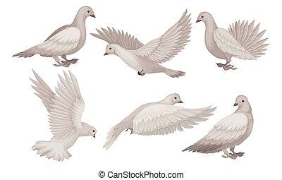 blanc, paix, pigeons, colombe, beau, amour, collection, illustration, foi, symbole, différent, vecteur, poses