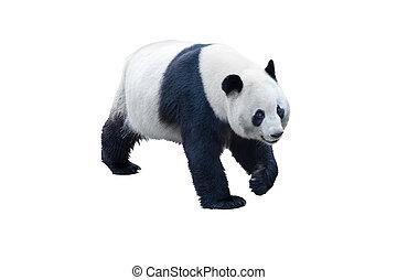 blanc, panda, isolé
