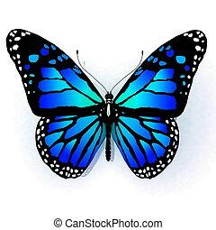 blanc, papillon, isolé