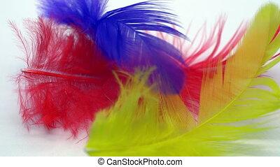 blanc, plumes, coloré, fond