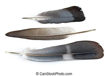blanc, plumes, trois, isolé