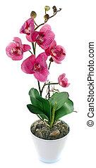blanc, pot fleurs, orchidée