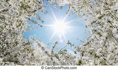 blanc, printemps