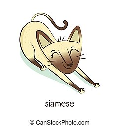 blanc, siamese., caractère, isolé, chat