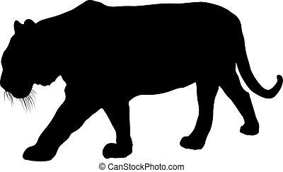 blanc, silhouette, fond, lynx