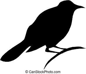 blanc, silhouette, oiseau, fond