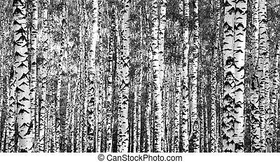 blanc, troncs, noir, arbres, bouleau