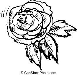 blanc, vecteur, illustration, arrière-plan., pivoine, croquis