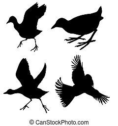 blanc, vecteur, silhouette, oiseaux, fond