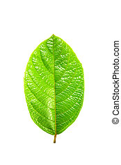 blanc vert, feuille, fond