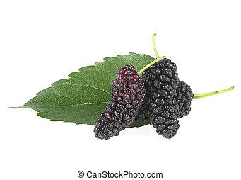 blanc, vert, mûre, fruits, organique, trois, feuille, fond, isolé