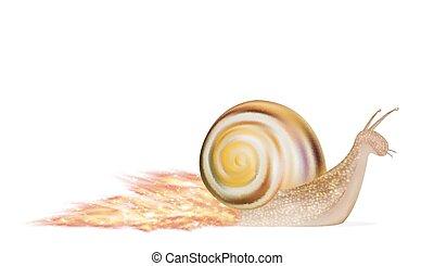 blanc, vitesse, fond, escargot