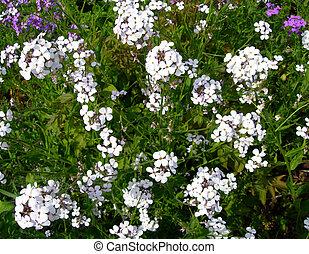 blanc, wildflowers