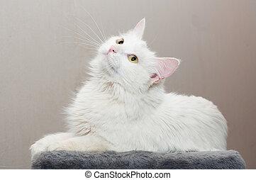blanc yeux chat jaune eyes fond blanc chat jaune photographie de stock rechercher images. Black Bedroom Furniture Sets. Home Design Ideas