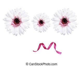 blanche, (gerbela), fleur