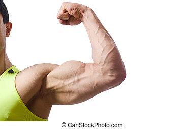 blanco, aislado,  muscular, hombre