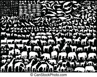 blanco, animales