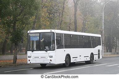 blanco, autobús