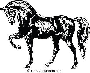 blanco, caballo negro
