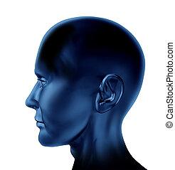 blanco, cabeza humana