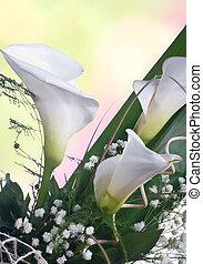 blanco, calla, lilys