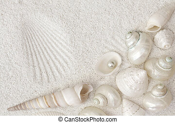 blanco, conchas marinas