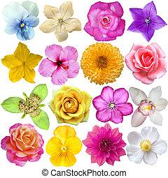 blanco, conjunto, cabezas, aislado, flor