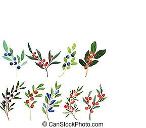 blanco, conjunto, plano de fondo, bayas, vector, aislado, ramitas, ramas