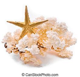 blanco, coral, estrellas de mar