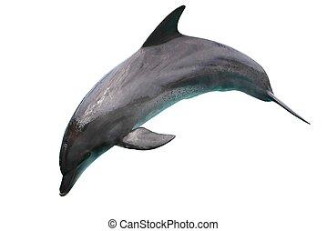 blanco, delfín, aislado, plano de fondo