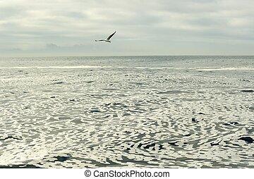 blanco, espuma, en, un, todavía, aguas océano, surface.