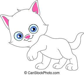 blanco, gatito