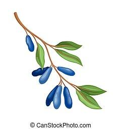 blanco, madreselva, plano de fondo, ramita, vector, hojas, aislado, verde, ilustración