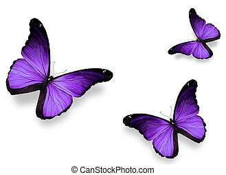 blanco, mariposas, violeta, aislado, tres